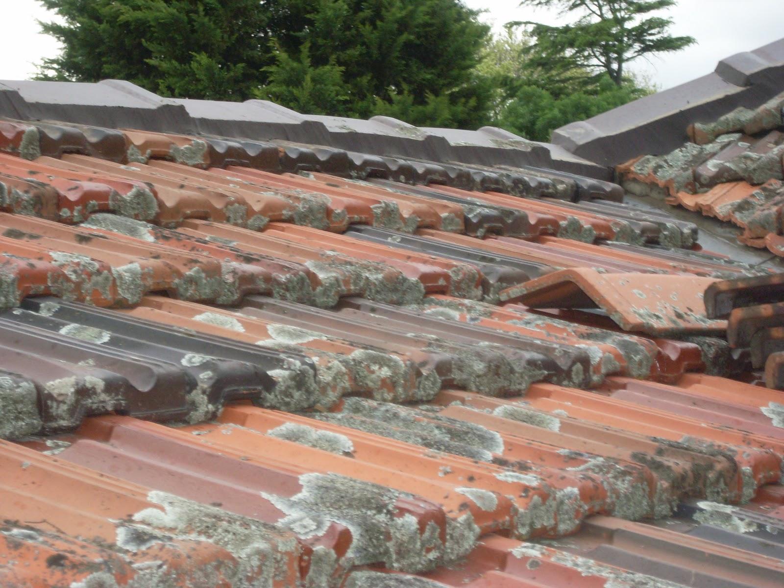 Waynes Home Renos Diy Pointing The Ridge Caps Roof Tiles