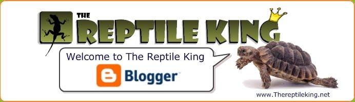 The Reptile King S Latest News Leopard Gecko Habitat Setup