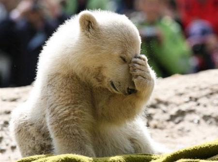 knut_berlin_polar_bear.jpg