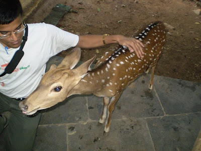 Raja the deer at Talakona Guest House
