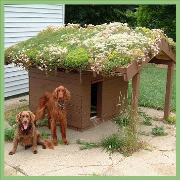 how to make your own green roof. Black Bedroom Furniture Sets. Home Design Ideas