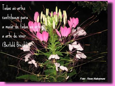 flores cor de rosa