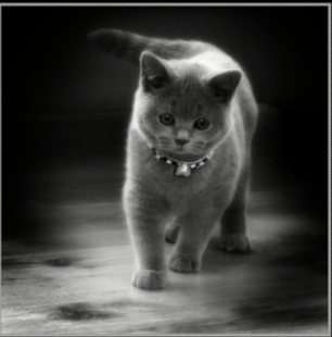 kitty with gemstone collar