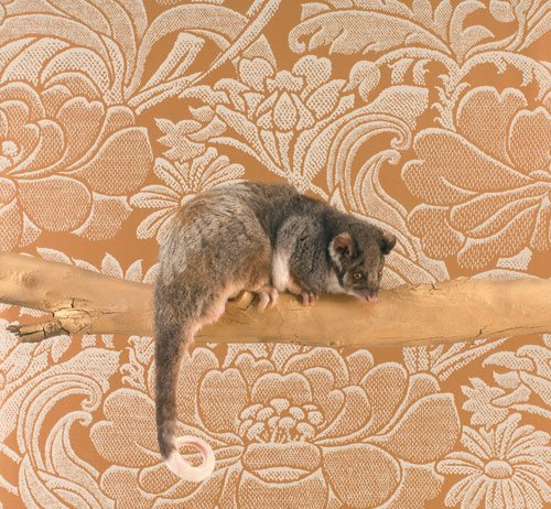 emma hack body artist, painted possum
