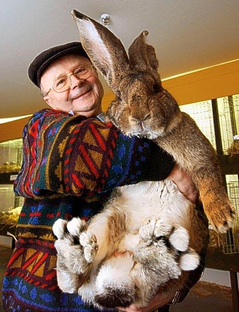 The 2006 record holder, Herr Rabbit, 22 pounds