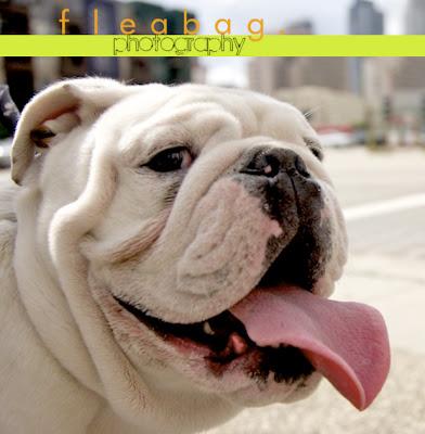 Fleabag Dog Photography
