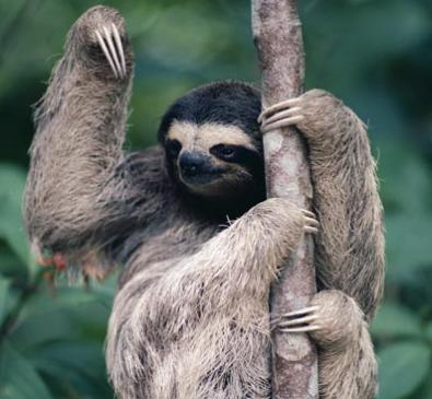 Cute Funny Wallpapers For Lazy Peopke Happy Pill Age Of Matthew S Mind Imps Sloths