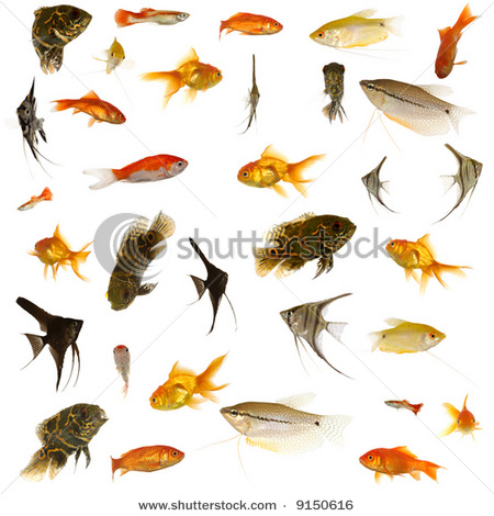 different types of fishes names - List of Fish Names