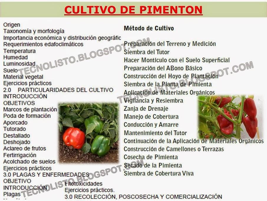 """""""Manual de Cultivo, Siembra Pimentón"""""""