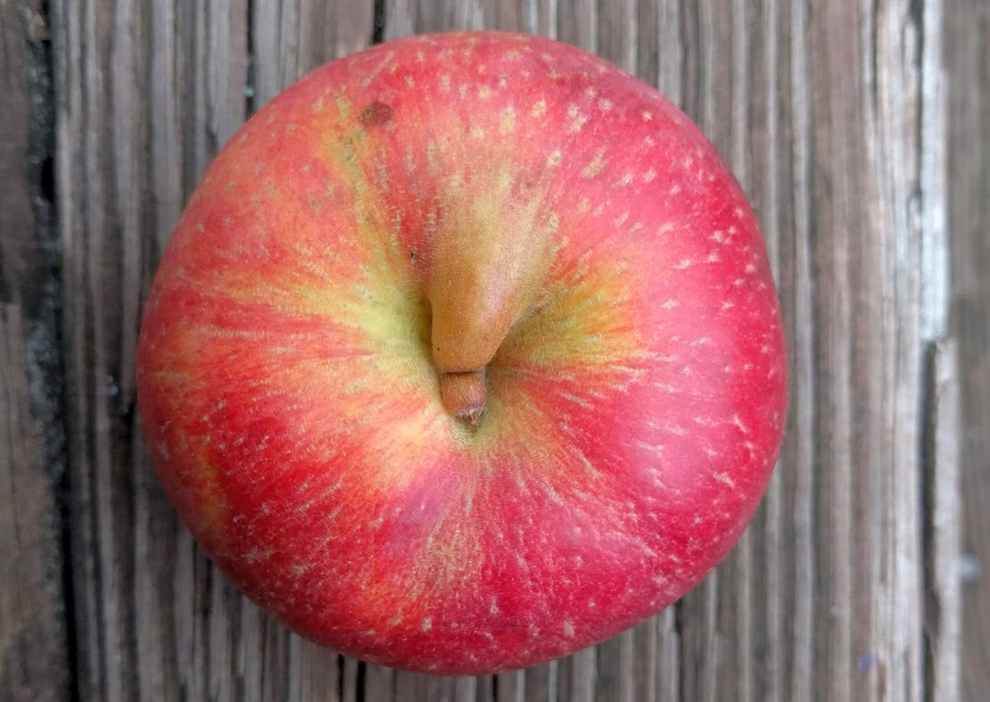 "The stem-end of an apple with a fold or ""nose"" of apple in the stem well"