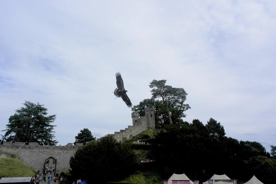 birds of prey warwick castle