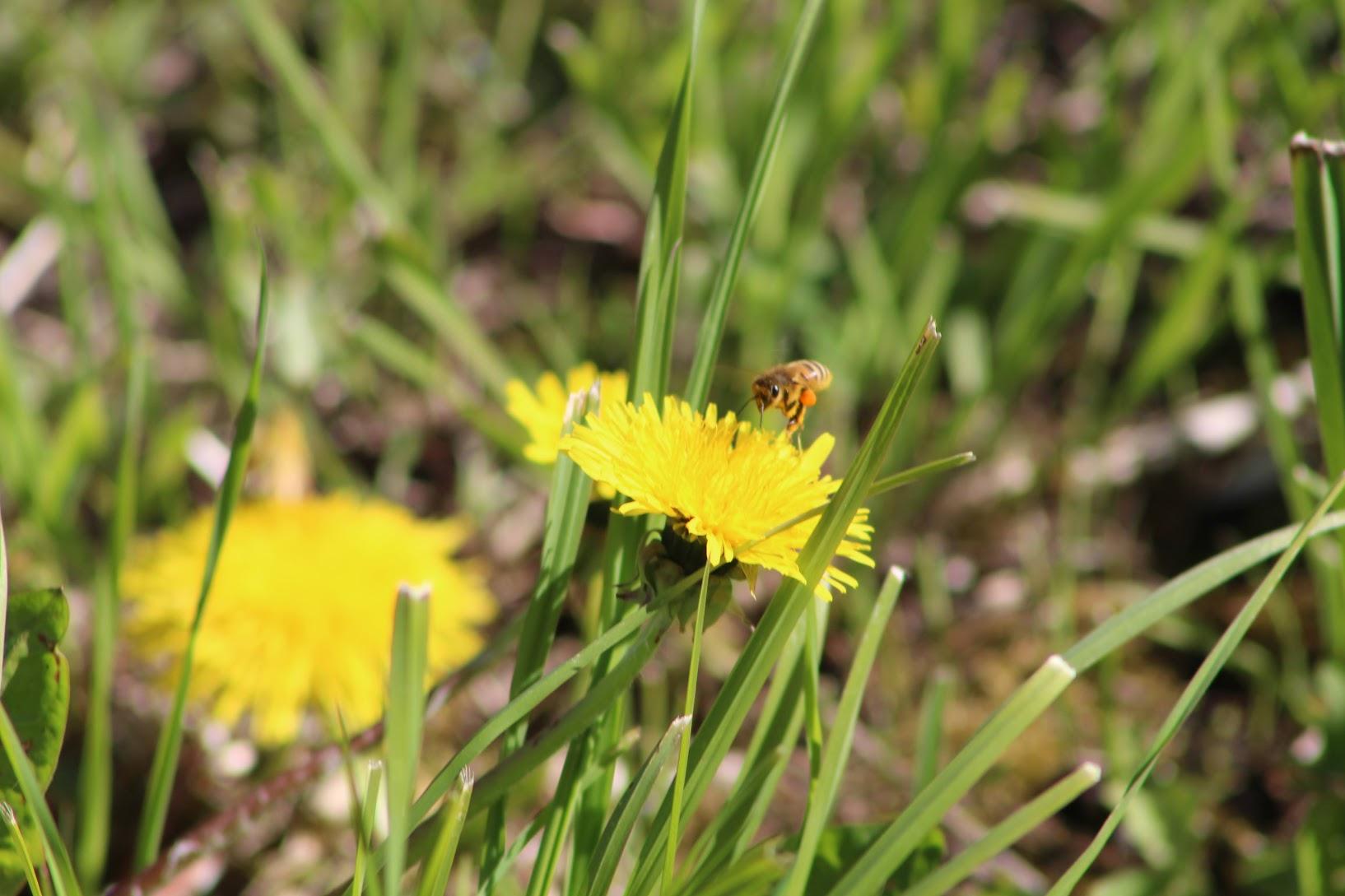 Kusta mesi Muhumaalt