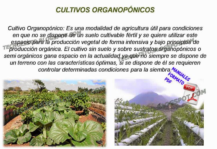 """""""Cultivo organoponico"""""""
