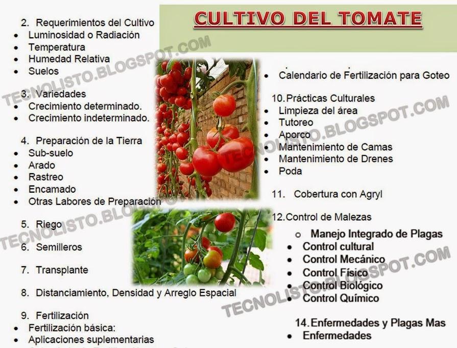 """""""Manual de Cultivo Siembra, Tomate"""""""